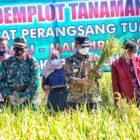 Bupati Wajo H. Amran Mahmud menyempatkan untuk panen demontration plot (demplot) tanaman padi di lokasi pertanian terpadu milik Ketua KTNA Wajo, Syahruddin.